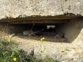 8-MONTE LAURO E DINTORNI (fortini tedeschi della seconda guerra mondiale-DEL TIPO TOBRUK (10)