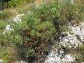 PIANTE GRASSE (2) -