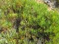 PIANTE GRASSE (3)