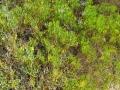 PIANTE GRASSE (4)