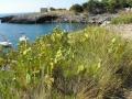 PIANTE GRASSE (6)