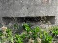 8-MONTE LAURO E DINTORNI (fortini tedeschi della seconda guerra mondiale-DEL TIPO TOBRUK (13)