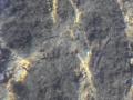 13-FONDALE CAMERINU TAGLIATE- PICCOLI PESCI (CAZZATEDDRA) (2)