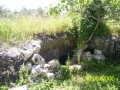 6 CRIPTA S. ELENA   (2)
