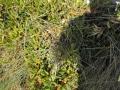 PIANTE GRASSE (7)